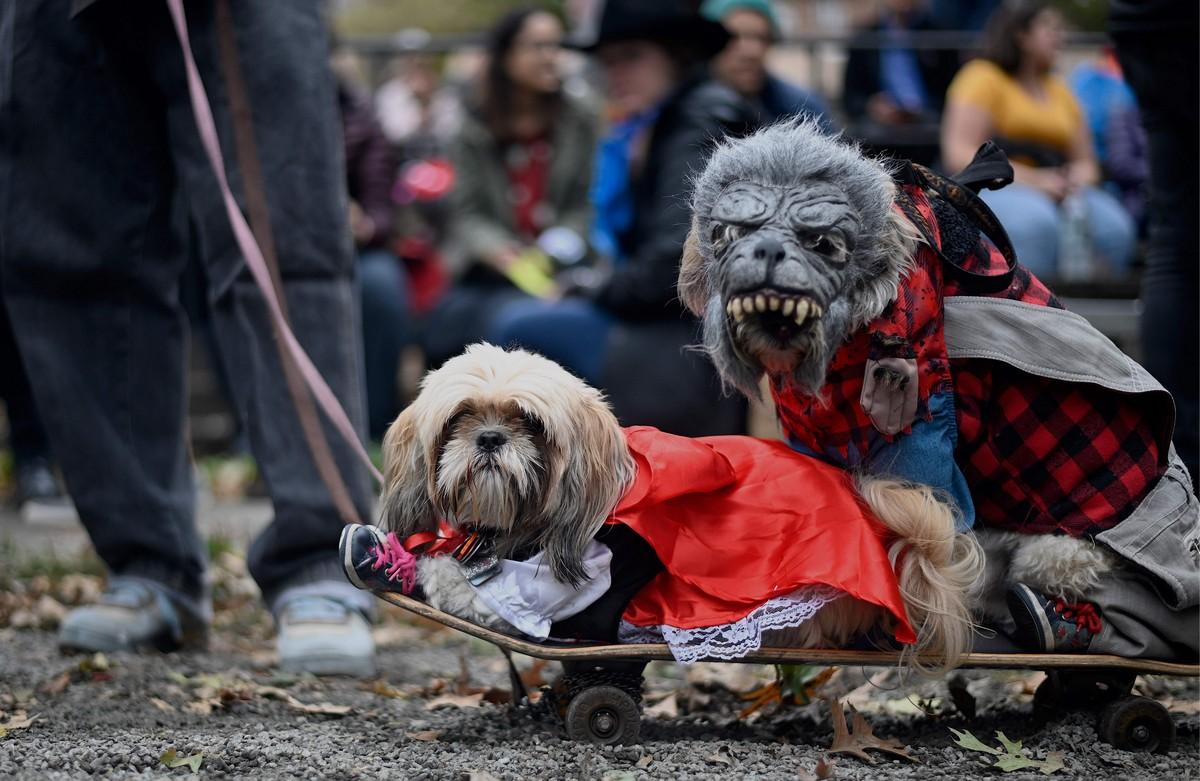 Ежегодный парад собак в честь Хэллоуина в Нью-Йорке
