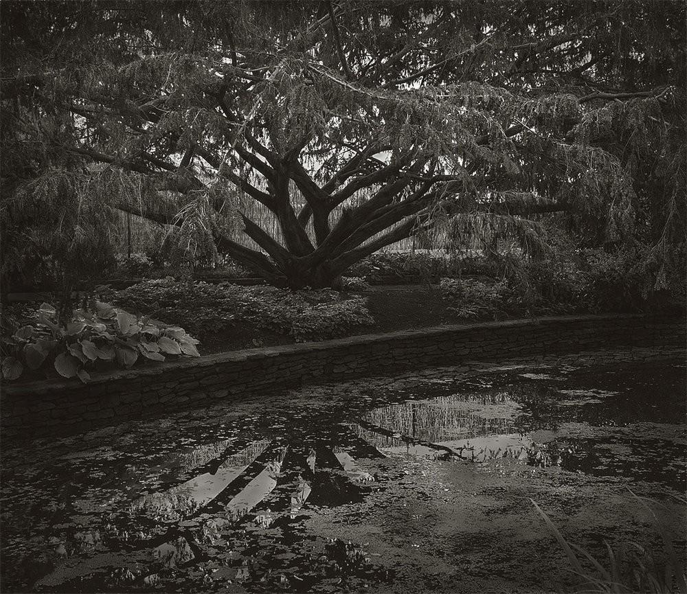 Фотопроект «В саду» от Бет Доу
