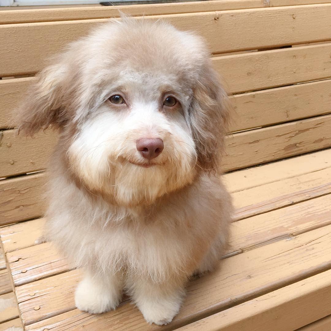 Нори — пес с человеческой мордой