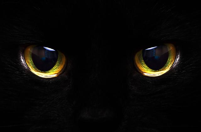 Почему некоторые животные могут видеть в темноте