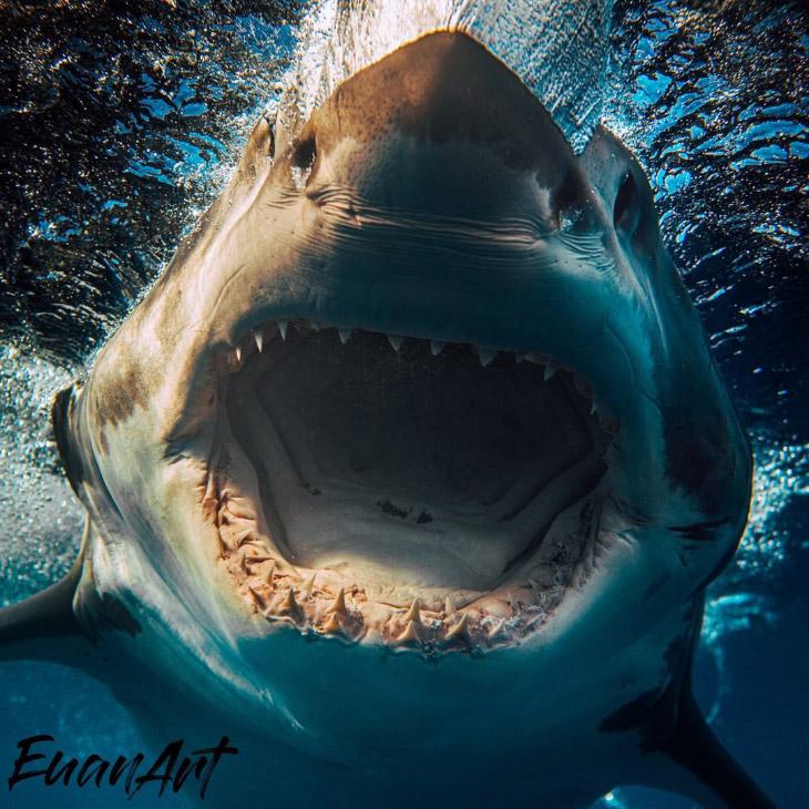 Потрясающие фотографии акул от подводного фотографа