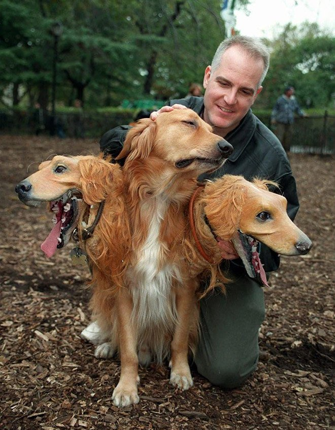 Пугающие трёхглавые костюмы для собак на Хэллоуин