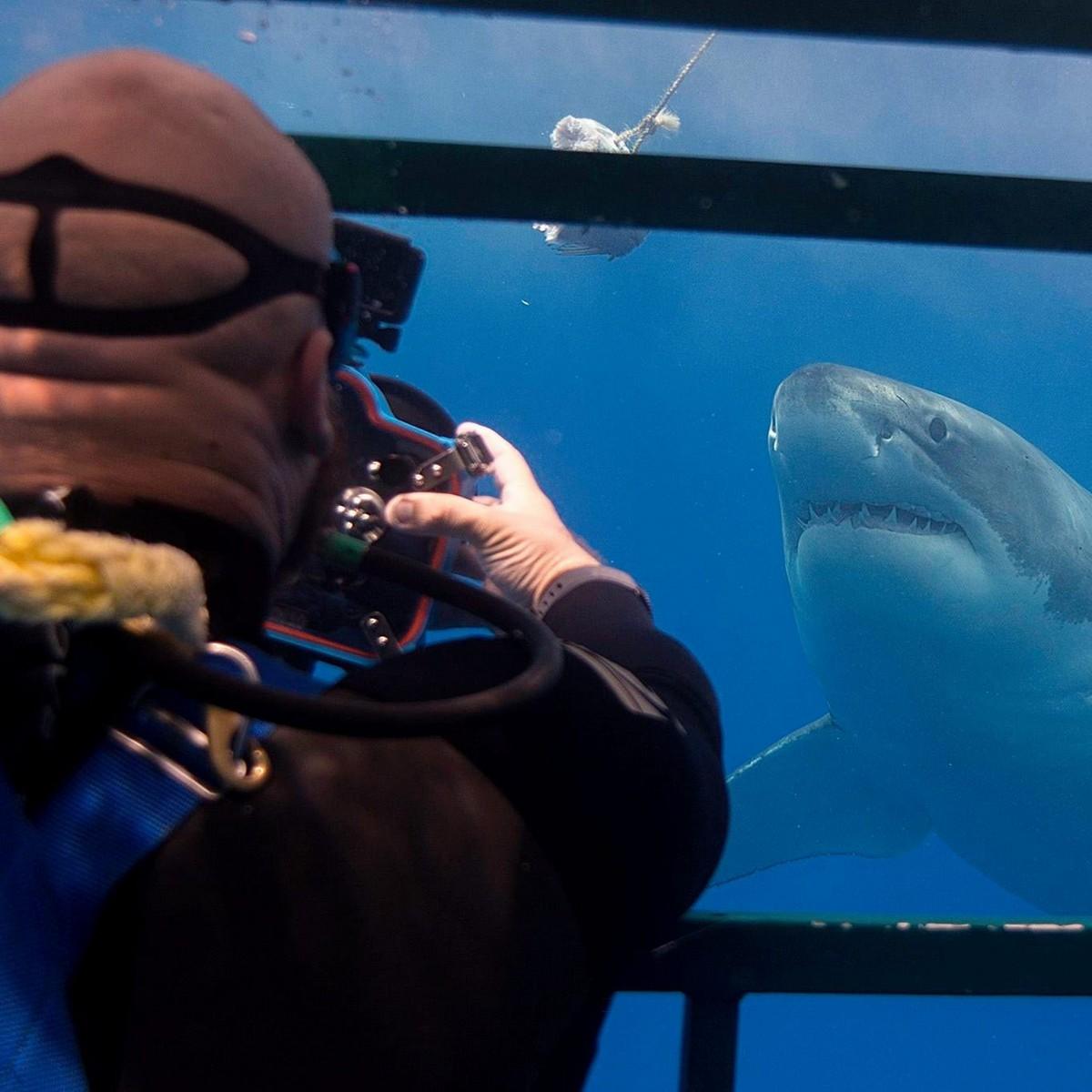 Британский фотограф делает невероятные снимки акул