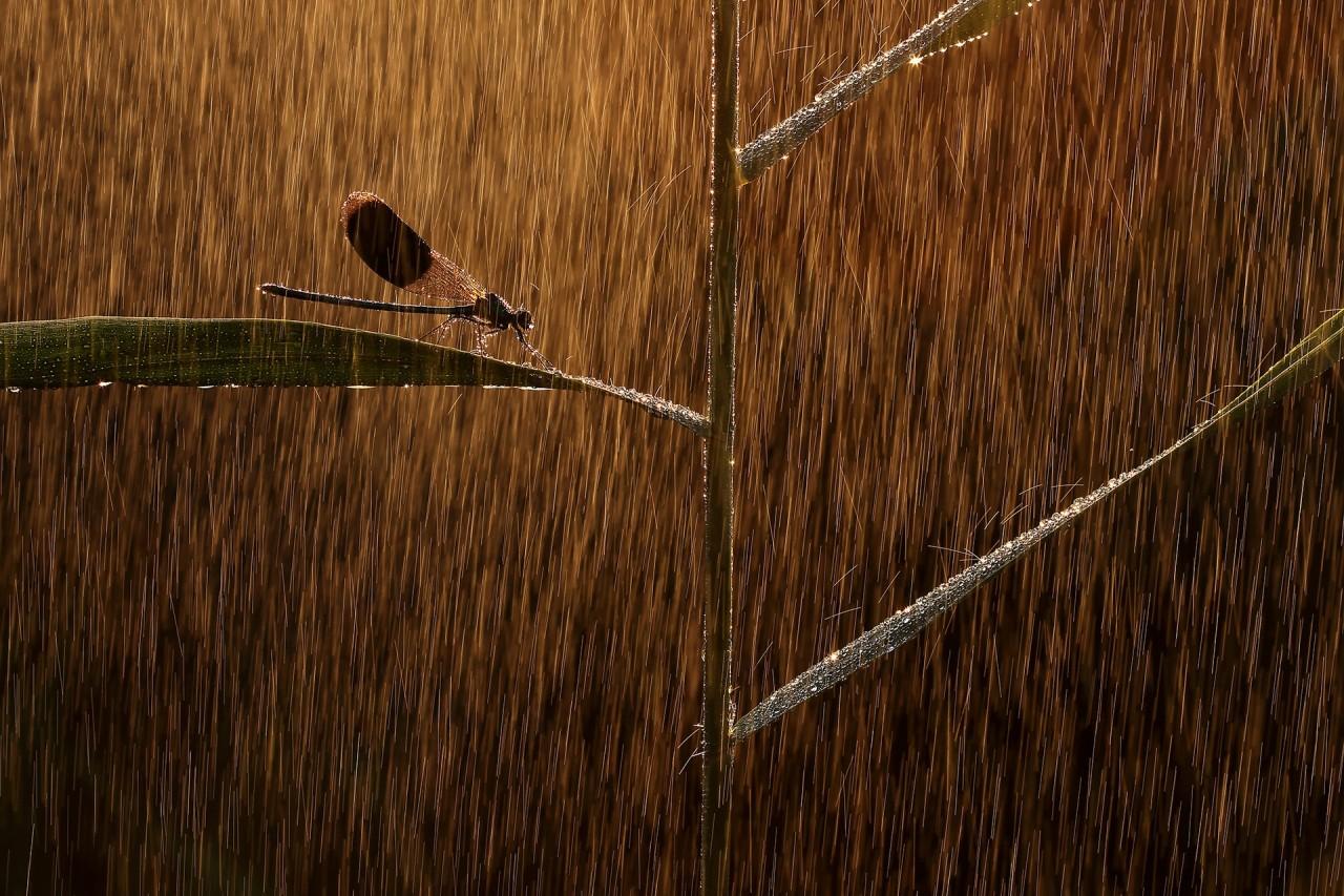 Лучшие снимки с конкурса «Nature Photographer of the Year» 2019