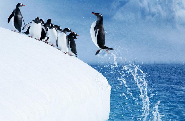 Почему же пингвины не могут летать?