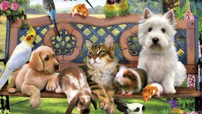Удивительные истории о преданности домашних животных