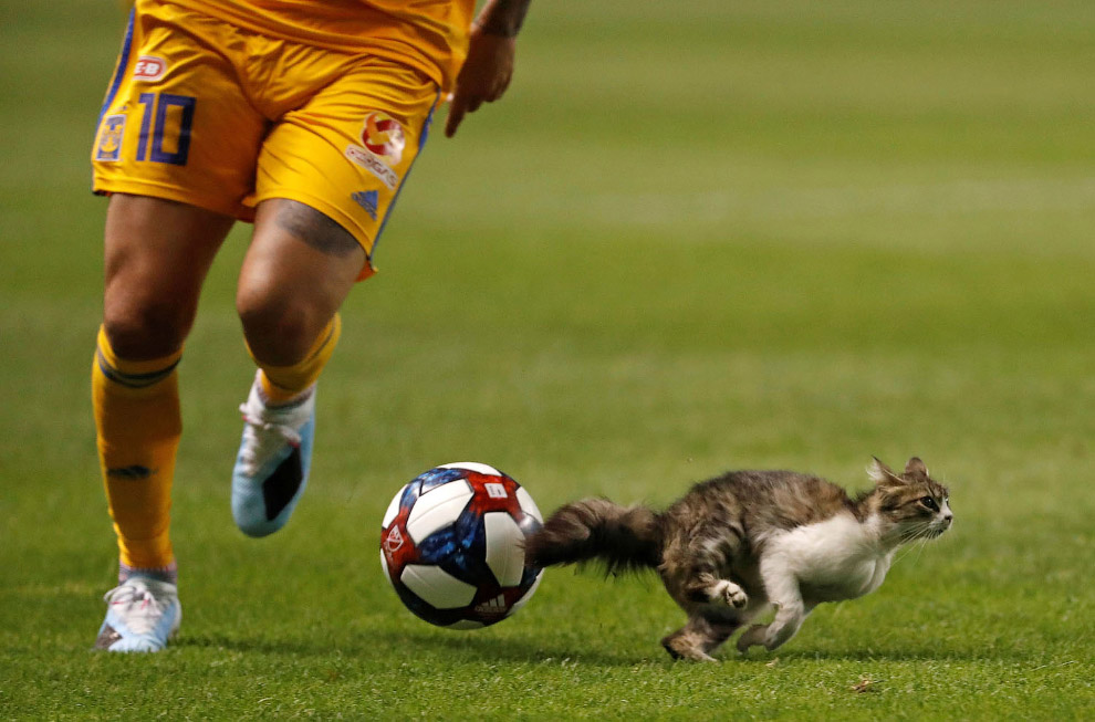 Забавные случаи появления животных на спортивных мероприятиях
