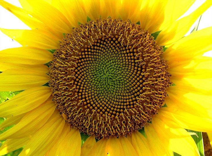 Жизнь желтого цвета в фотографиях