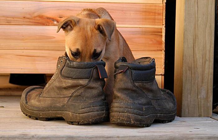 Что поможет избавиться от неприятного запаха в ботинках