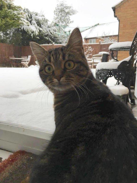 Эмоции людей и животных, которые увидели снег впервые