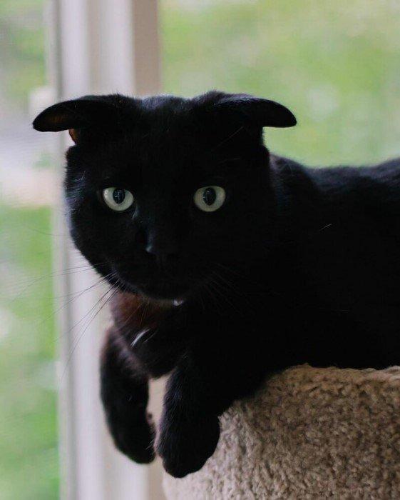 Очаровательный кот со странными ушами