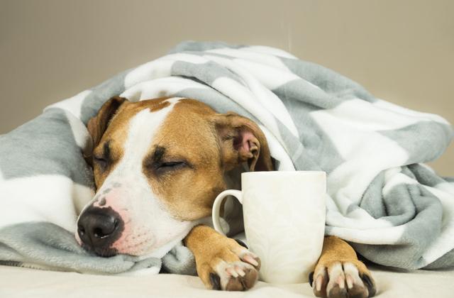 Почему кофе действует на людей по-разному