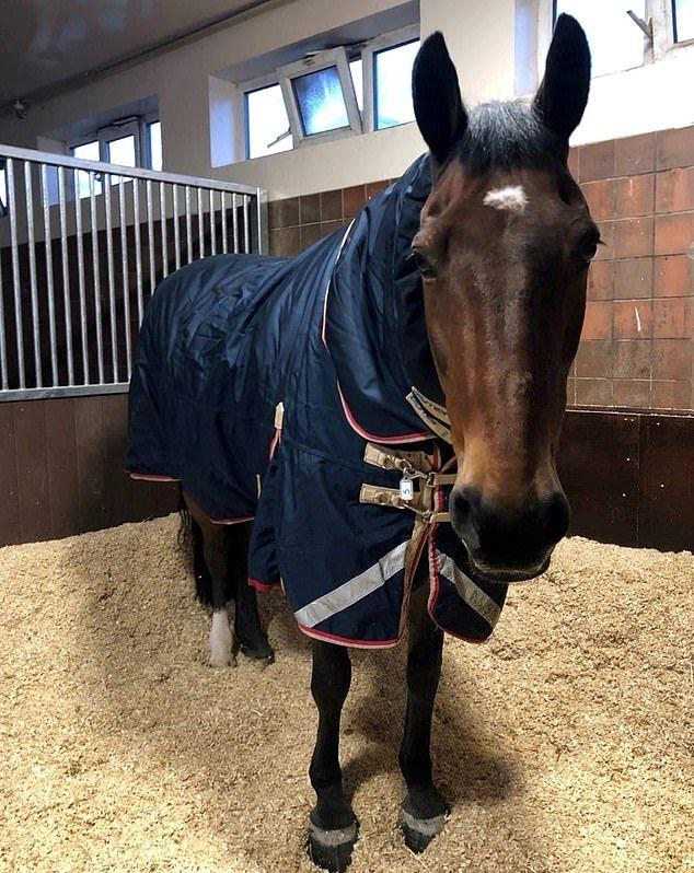 Полицейский конь не выходит на смену без большой кружки чая