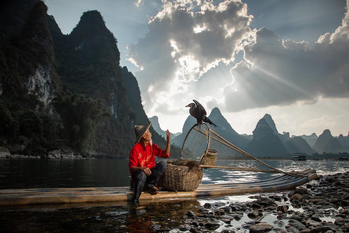 Удивительная рыбалка с помощью бакланов в Китае