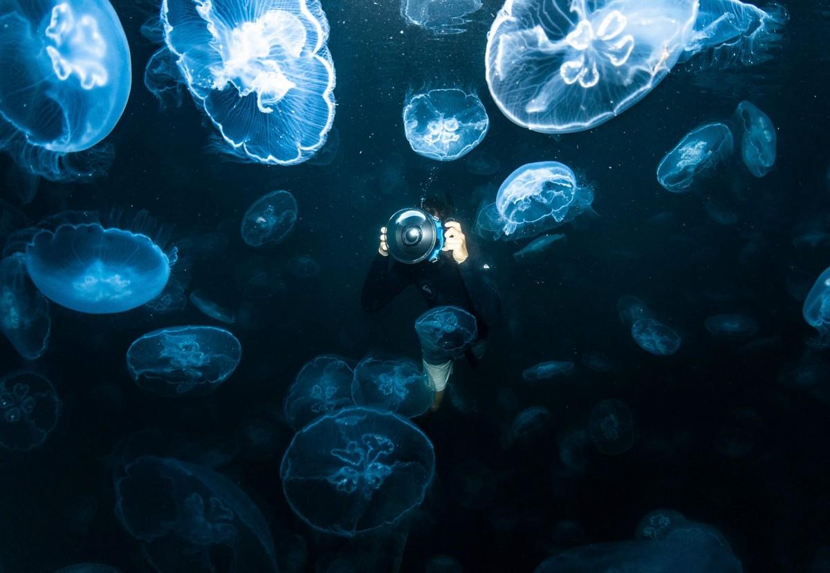 Удивительные снимки фридайверов в океане с медузами