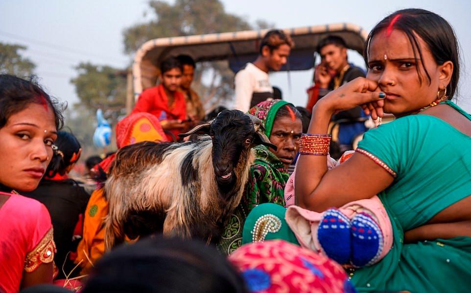 Жертвоприношение животных на индуистском фестивале Гадхимаи