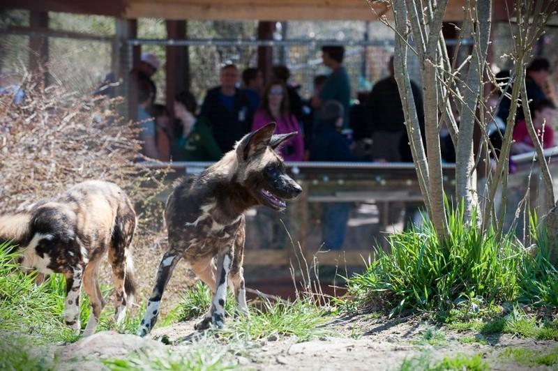 Жуткие истории, связанные с посетителями зоопарка