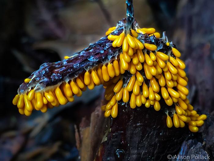 Экстремальные макроснимки грибов