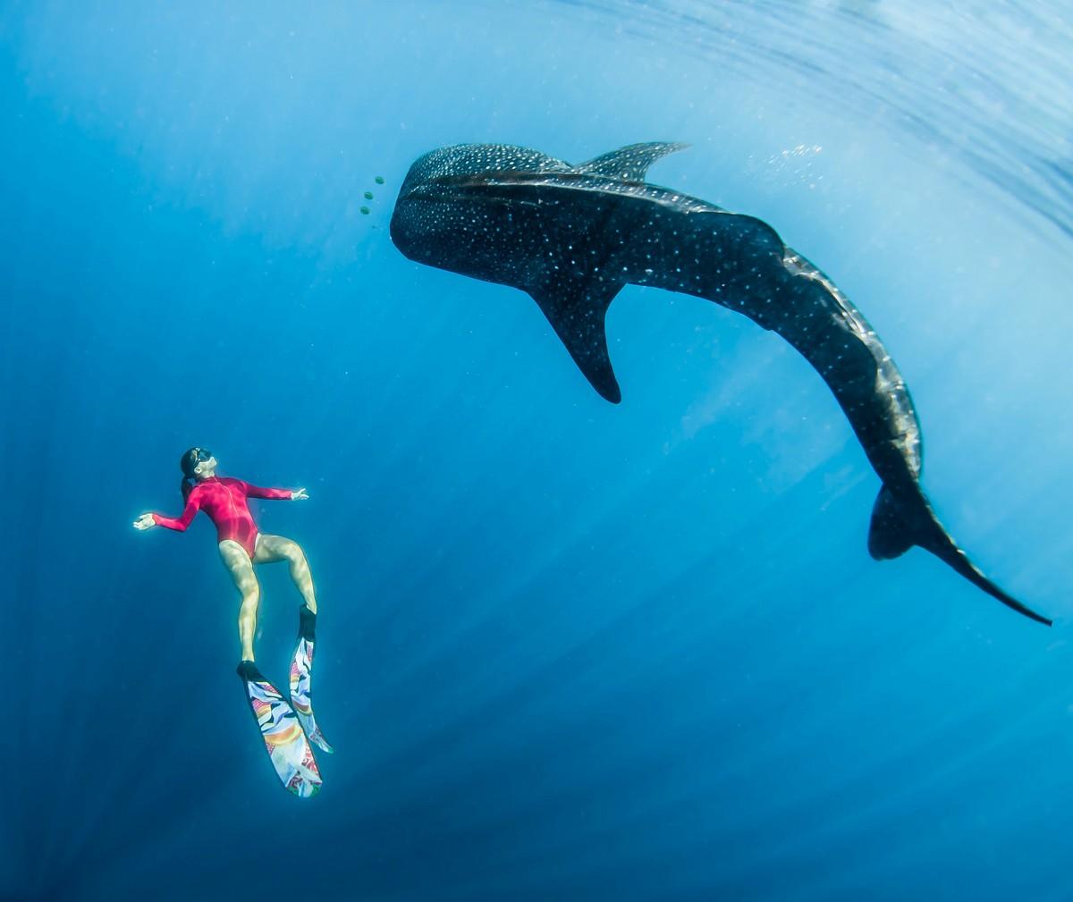 Фридайвер плавает вместе с огромными китами
