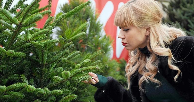 Как использовать иголки от новогодней красавицы после праздников