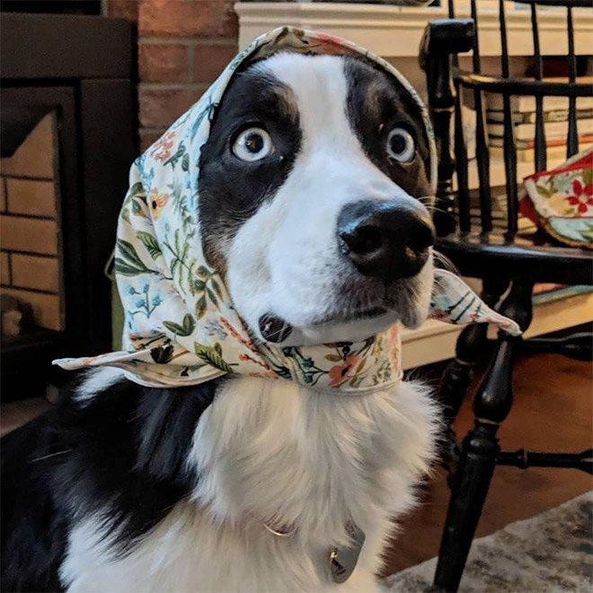 Они оставили собак погостить у бабушки