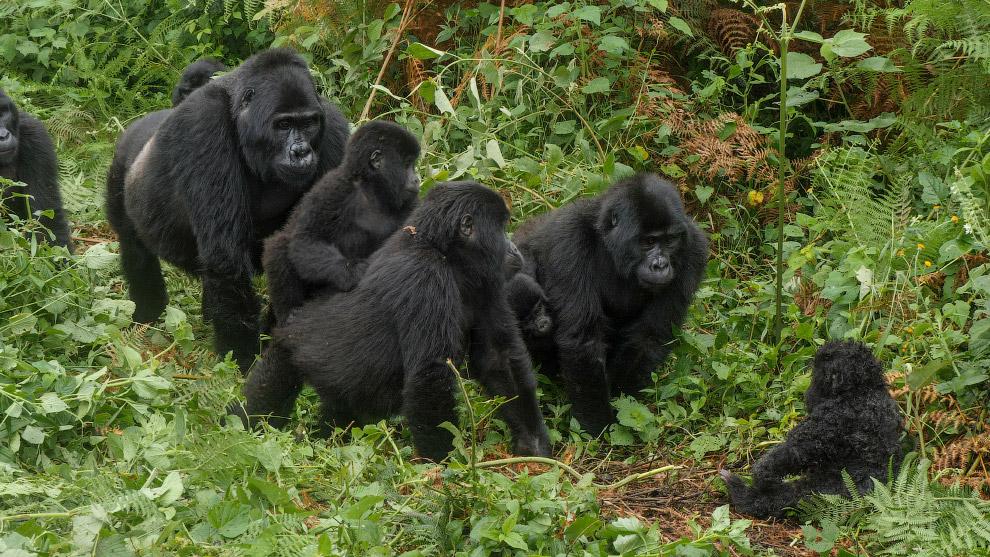 Шпионы среди животных снимают телесериал о дикой природе