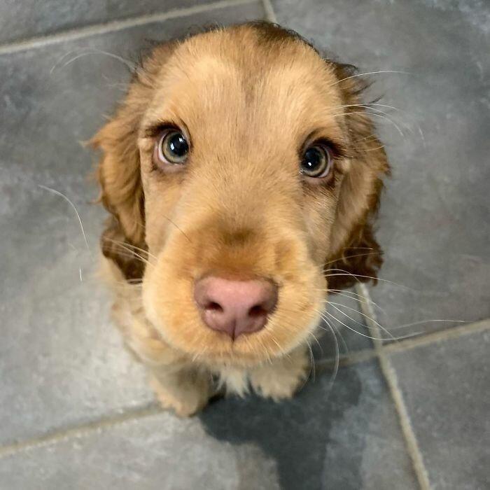 Собачка Винни, которая выглядит как мультяшный персонаж