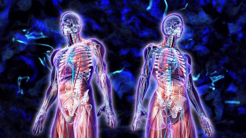 Удивительные вещества, которые есть в теле человека