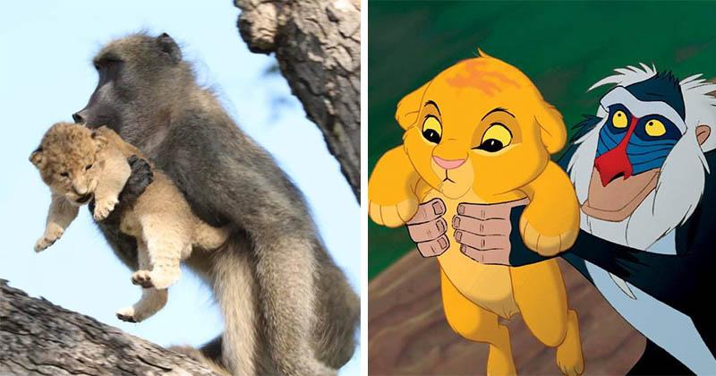 Бабуин и львёнок повторили знаменитую сцену из «Короля льва»