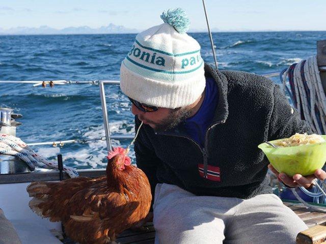 Курица — лучший товарищ в кругосветном путешествии