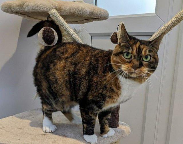 Многопалая кошка покорила сотрудников приюта и пользователей