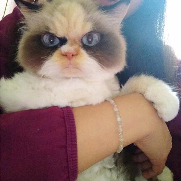 Новая Сердитая Кошка выглядит более злой, чем ее предшественница