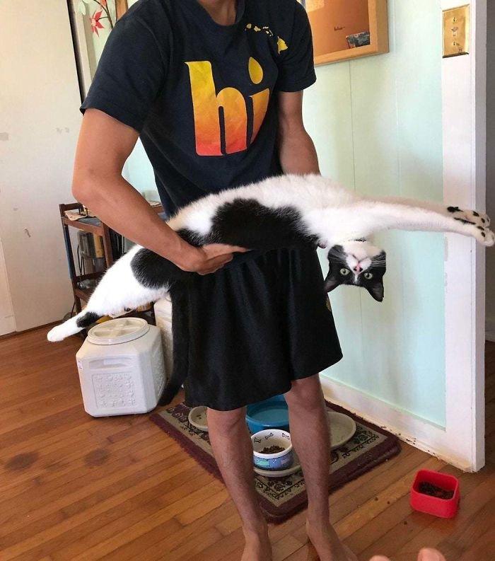 Полный оттяг: насколько сильно котики могут удлиняться