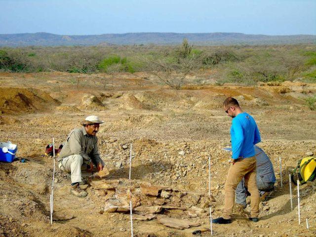 Ученые нашли останки черепахи, которым примерно 13 млн лет