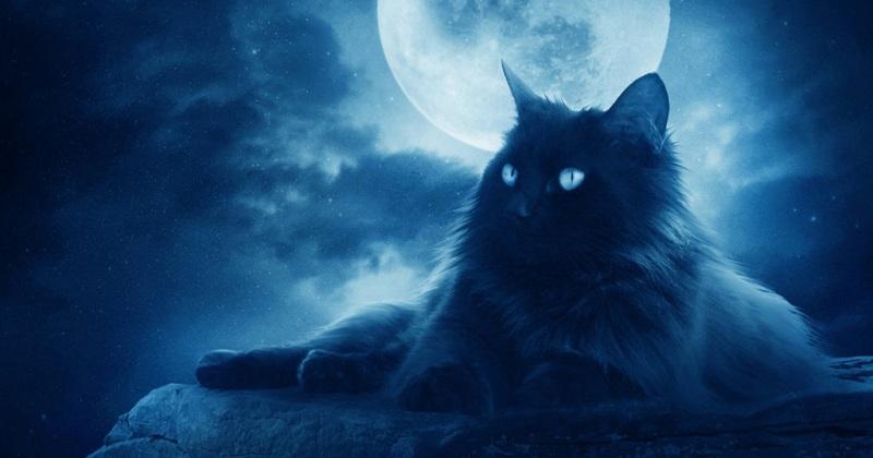 Что мы знаем про кота Баюна