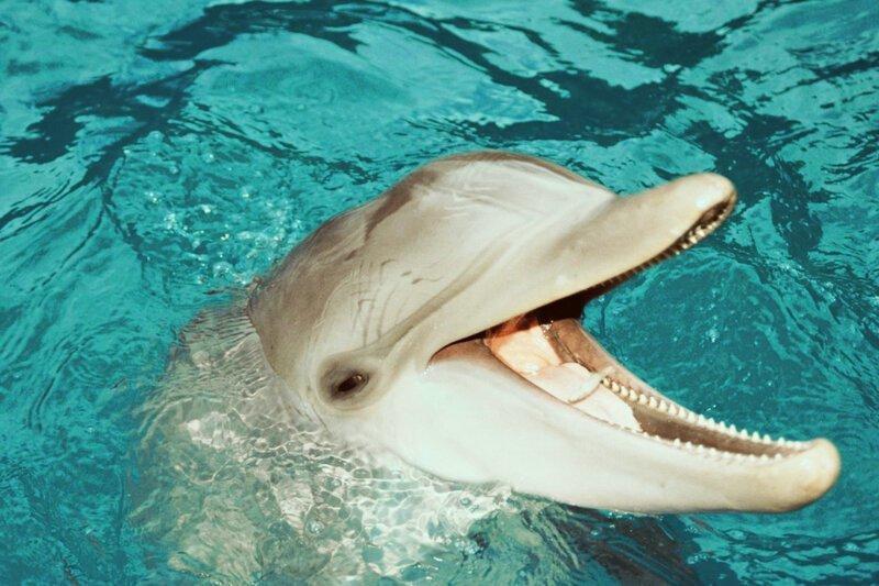 Где дельфины и киты берут пресную воду?