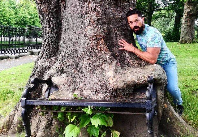Голодное дерево возле Кингс-Иннс в Дублине