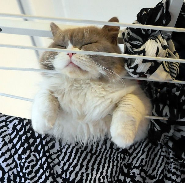 Кошки могут спать где угодно и в любой позе