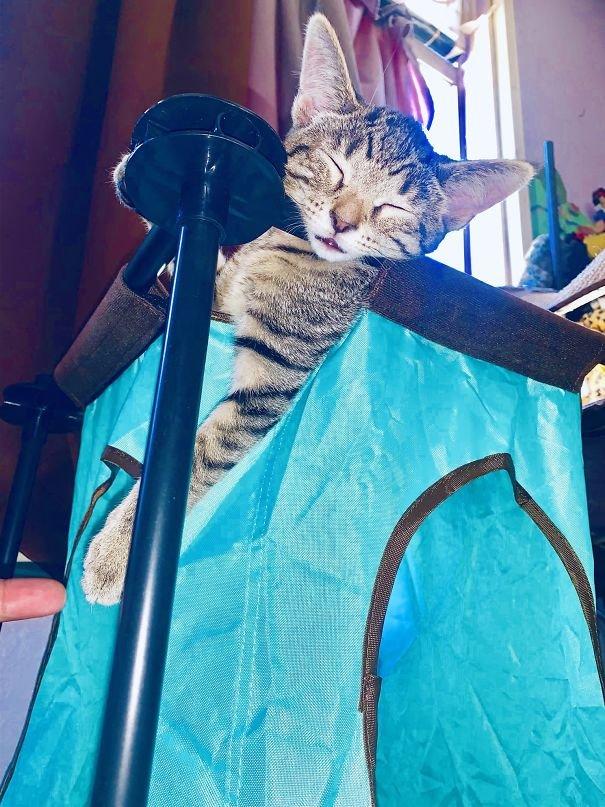 Котики могут спать где угодно и в любой позе