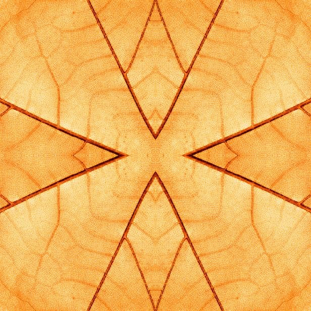 Красота природы в симметричных композициях