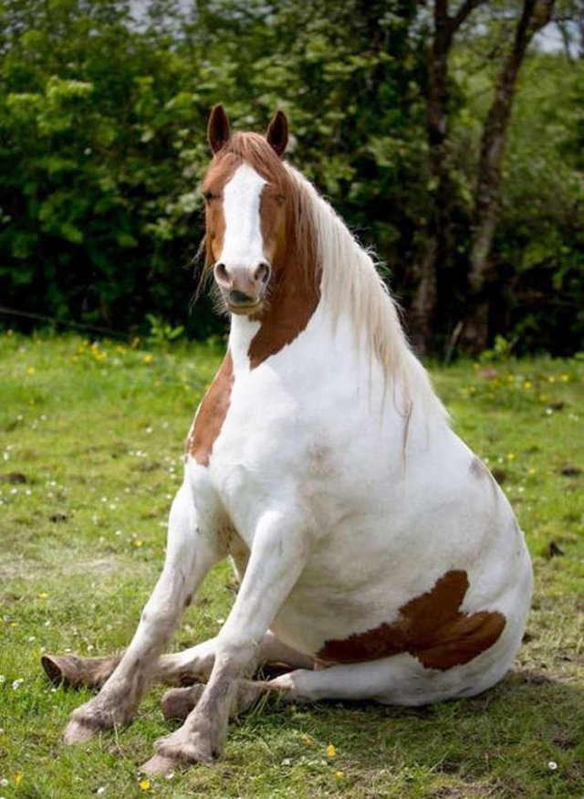 Лошади тоже сидят, словно собаки