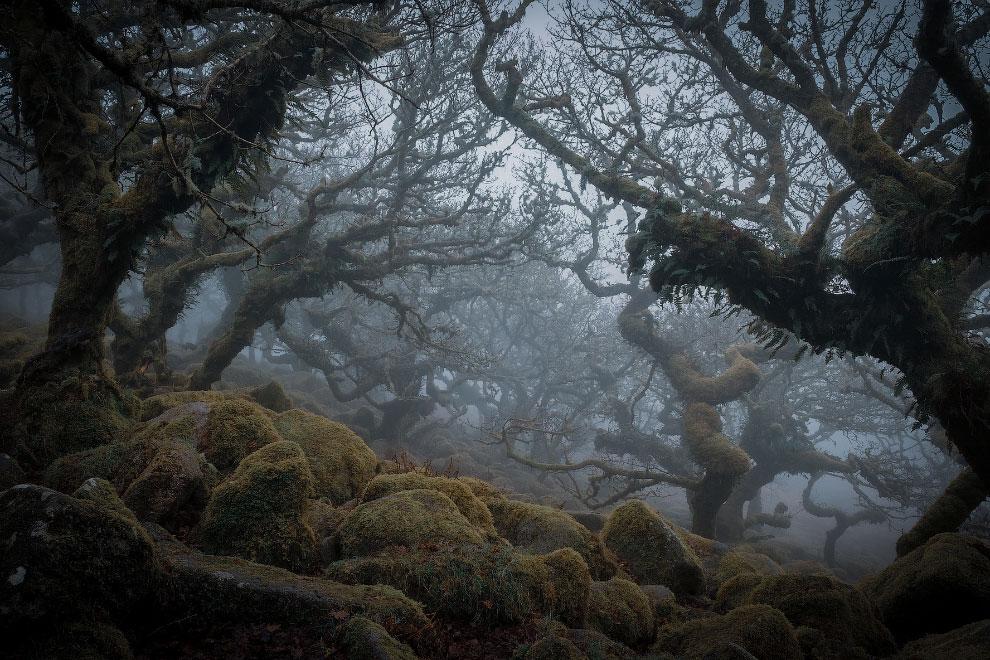 Прекрасные снимки из национальных парков и заповедников Англии
