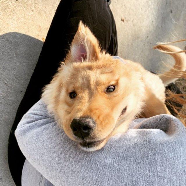 «Собака-единорог» по кличке Рэй прославилась в сети