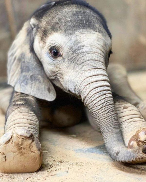 Странные факты о животных, в которые сложно поверить