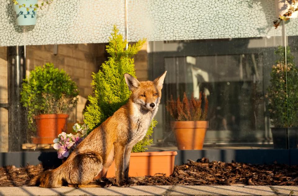 Дикие животные на городских улицах во время карантина