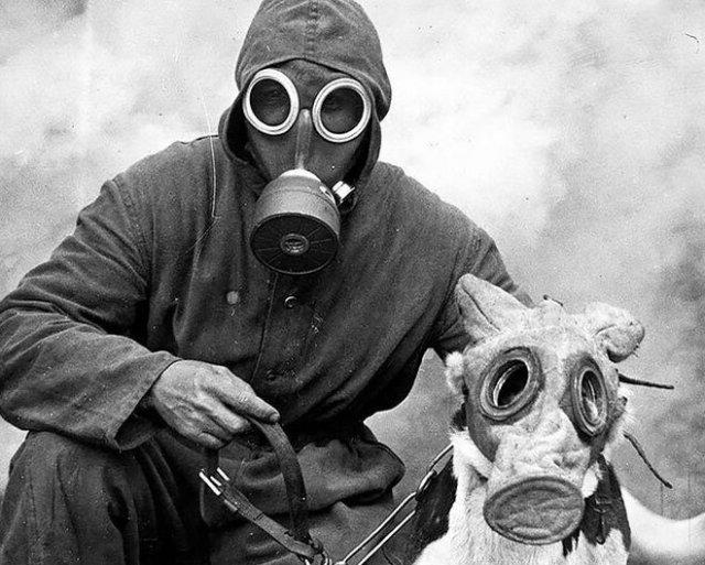Собаки в противогазах на снимках времен Первой Мировой войны