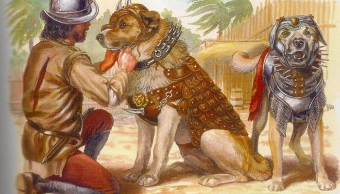 Боевые собаки — грозное оружие конкистадоров