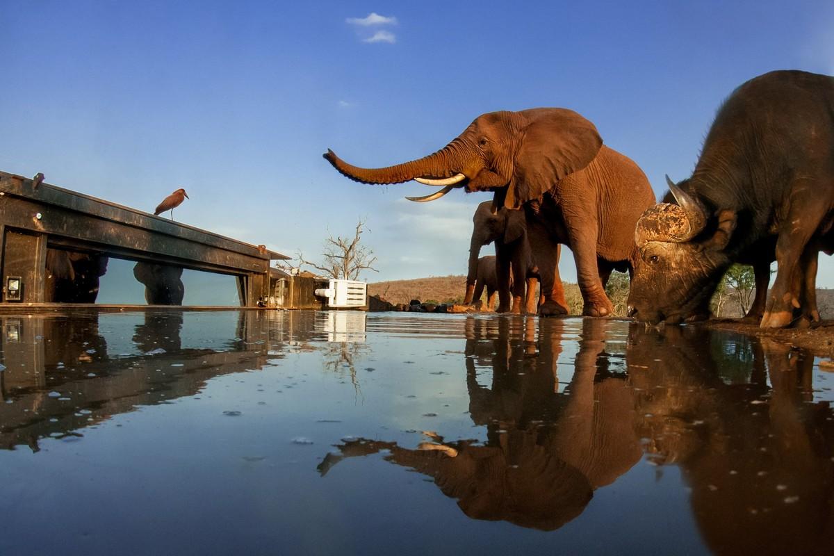 Дикая природа в объективе фотографа Бенсе Мате