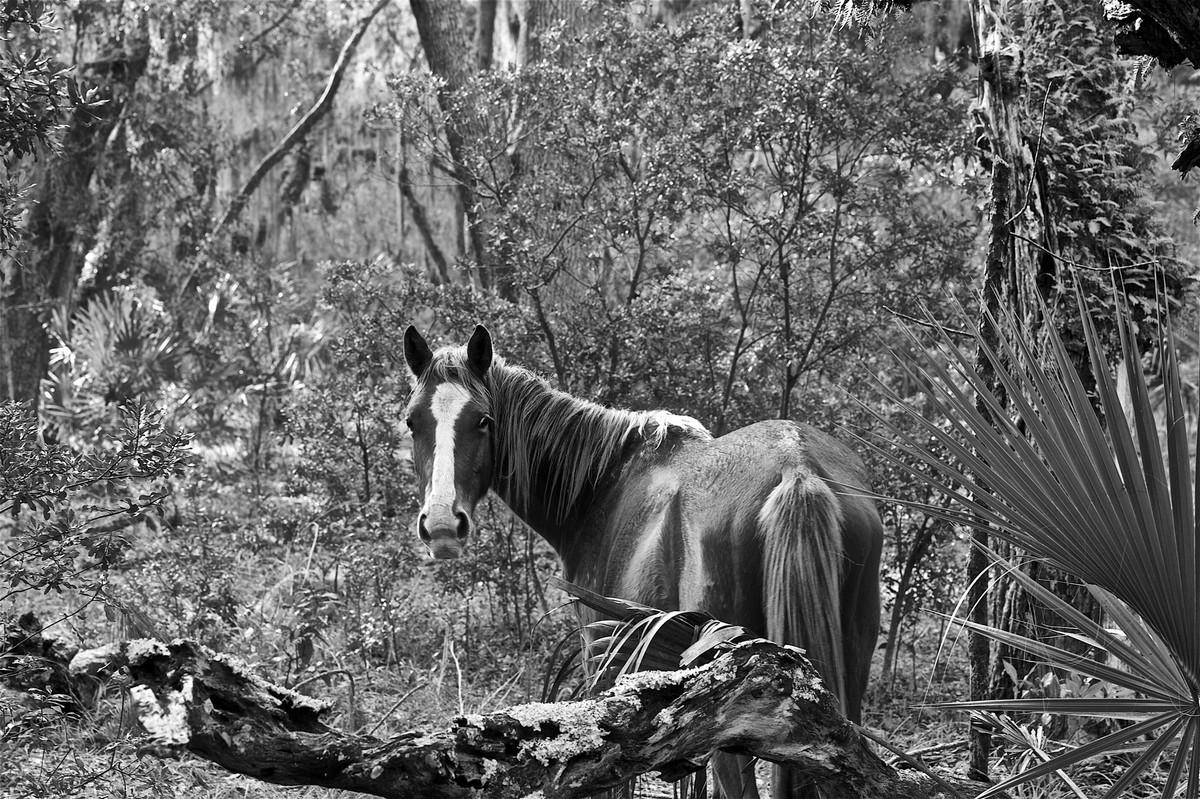 Дикие лошади острова Камберленд на снимках Анук Кранц