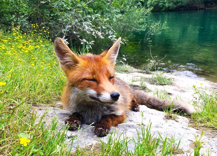 Игривые и прекрасные лисицы на снимках